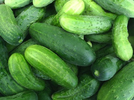 Ogórki są polecane w diecie zielonej