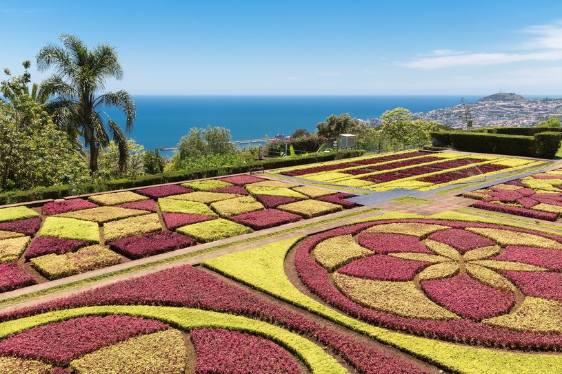 Ogród botaniczny na Maderze /123RF/PICSEL