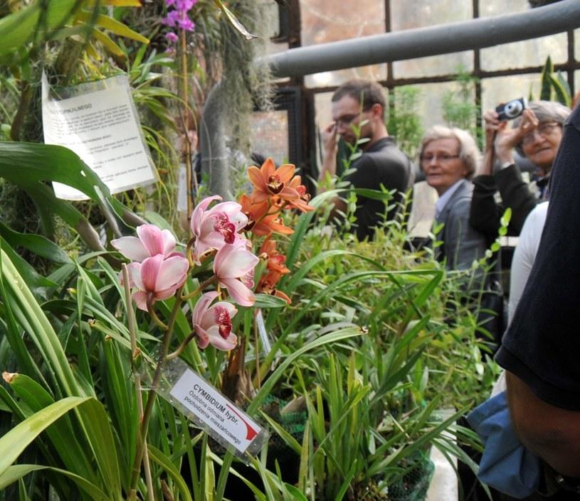 Ogród botaniczny UJ /M. Lasyk /Reporter