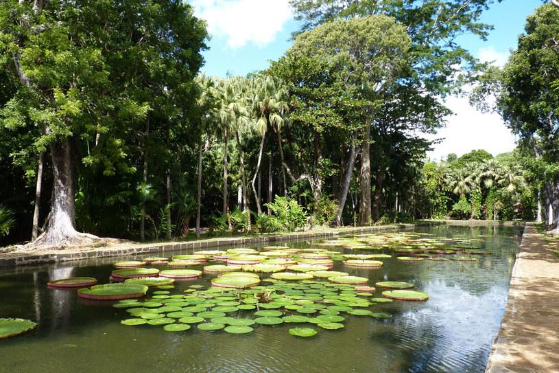 Ogród botaniczny w Mauritius /123RF/PICSEL