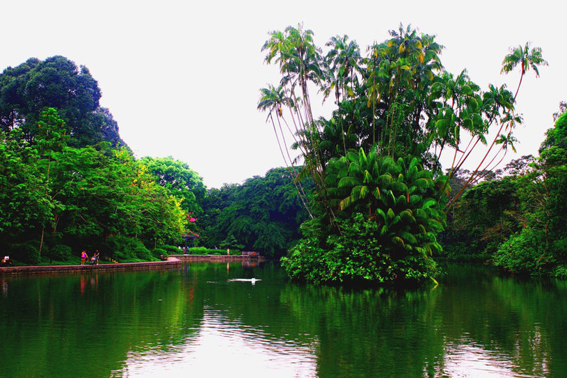 Ogród botaniczny w Singapurze /123RF/PICSEL