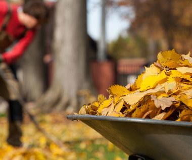 Ogród dla spóźnialskich: Jakie rośliny mogą być sadzone we wrześniu?