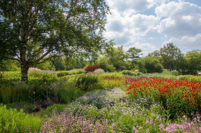 Ogród hortiterapeutyczny /©123RF/PICSEL
