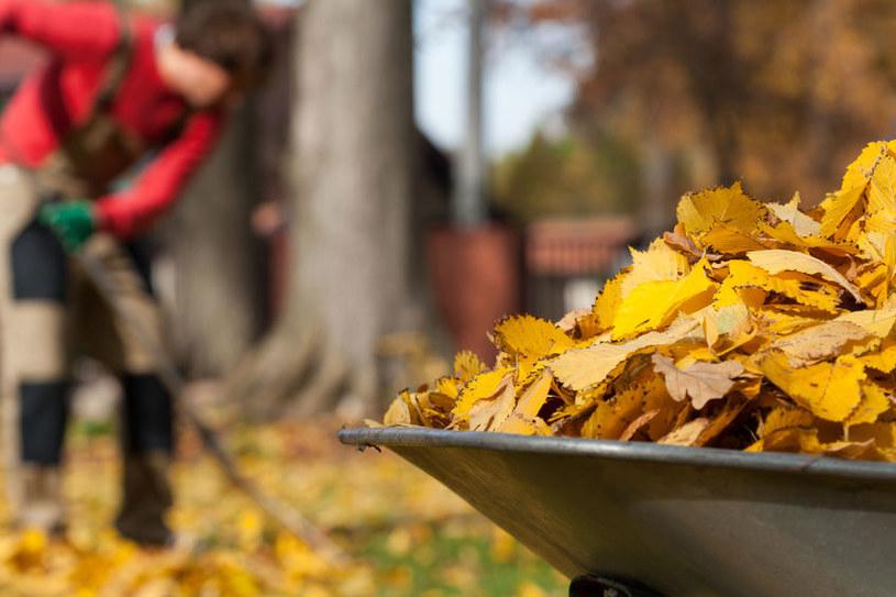 Ogród jesienią /©123RF/PICSEL