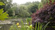 Ogród Moneta w Giverny