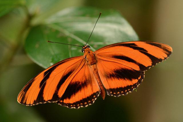 ogród motyli /© Photogenica