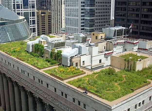 Ogród na budynku w Chicago /AFP