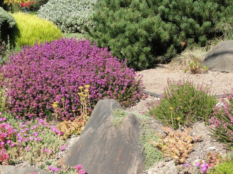 Ogród skalny /123RF/PICSEL