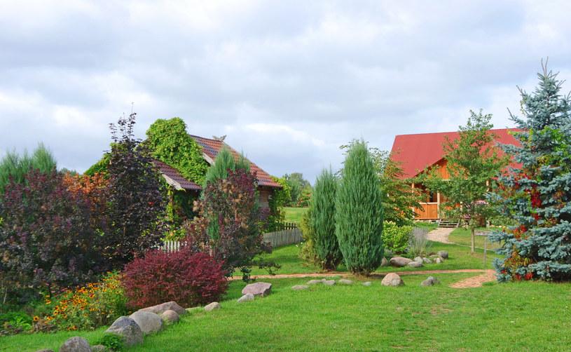 Ogród w Wielkopolsce; zdj. ilustracyjne /Marek Bazak /East News