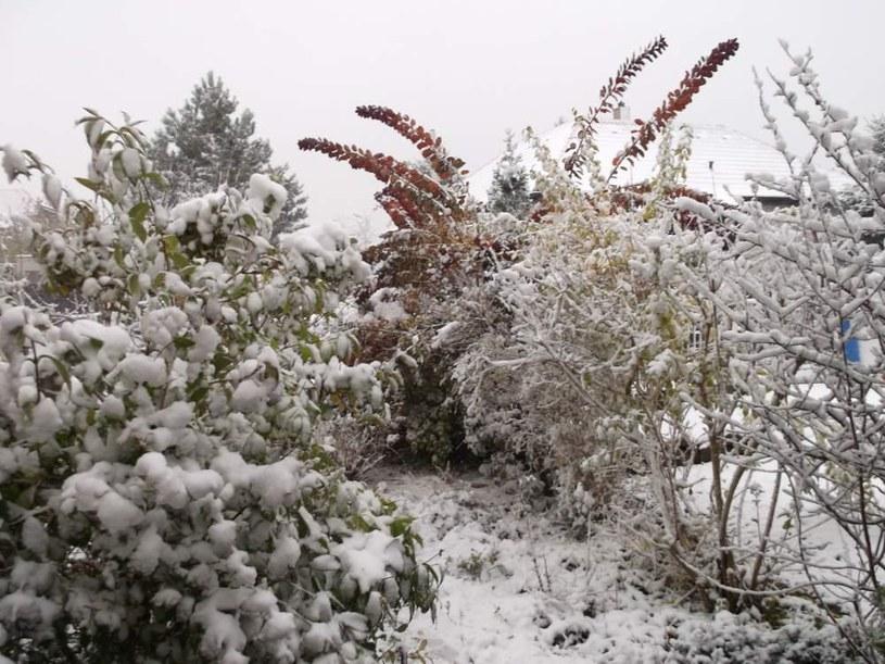 ogród w zimie /© Photogenica