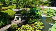 Ogród wodny