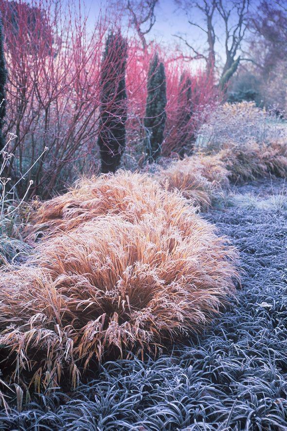 ogród zimowy /© Photogenica