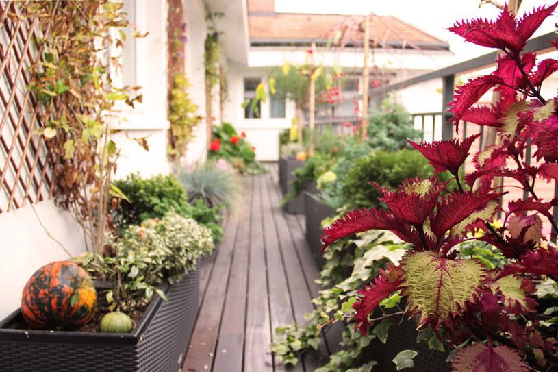 Ogródek na balkonie /Tatiana Mihaliova /123RF/PICSEL