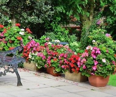 Ogrodowe rośliny, które mogą być trujące