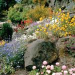 Ogrody naturalistyczne. to hit. Też możesz taki mieć!