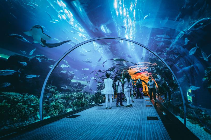 Ogromne akwarium morskie w Dubaju jest jedną z najpopularniejszych atrakcji /123RF/PICSEL