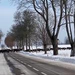Ogromne stado żubrów sfilmowane na Podlasiu. Co za widok!