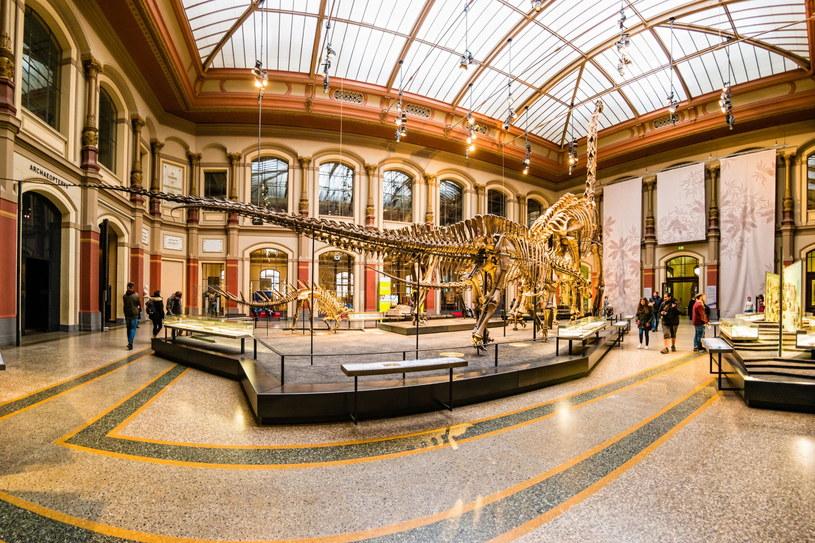 Ogromne szkielety dinozaurów z berlińskiego Muzeum Historii Naturalnej zrobią wrażenie nie tylko na dzieciach /123RF/PICSEL