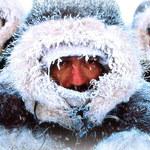 Ojmiakon - podróż do Bieguna Zimna