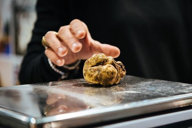 Okaz wylicytowany za rekordową sumę waży 1005 gramów. /©123RF/PICSEL