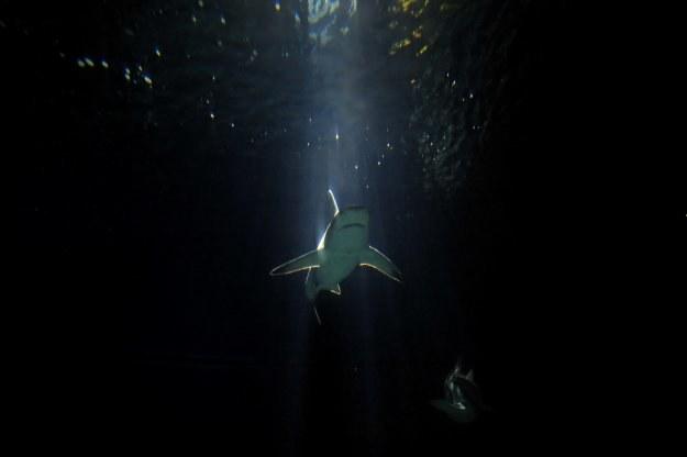 Okazuje się, że w Adriatyku jest dużo więcej delfinów, rekinów i waleni, niż się spodziewano /AFP