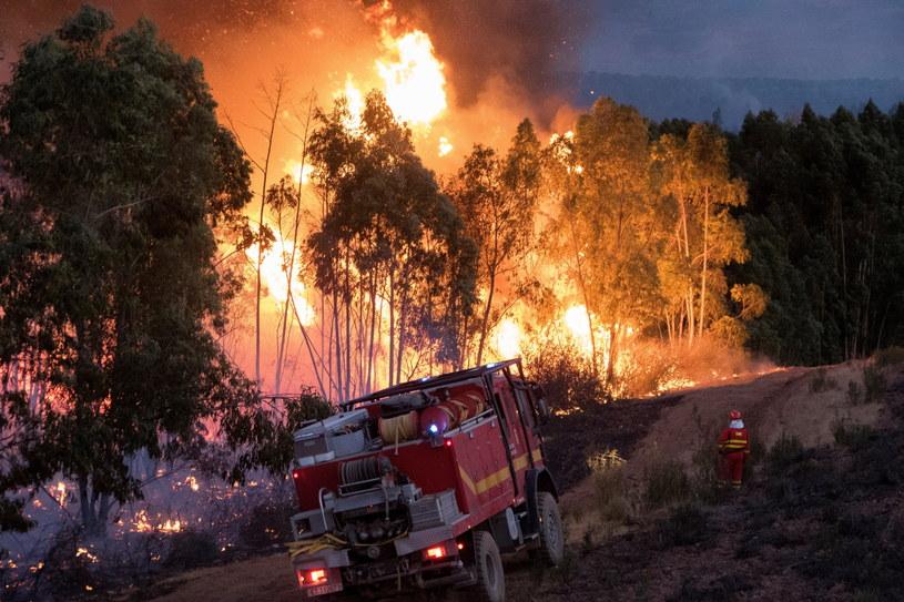 Około 3500 osób ewakuowano w Andaluzji z powodu pożaru lasów /David Arjona /PAP/EPA