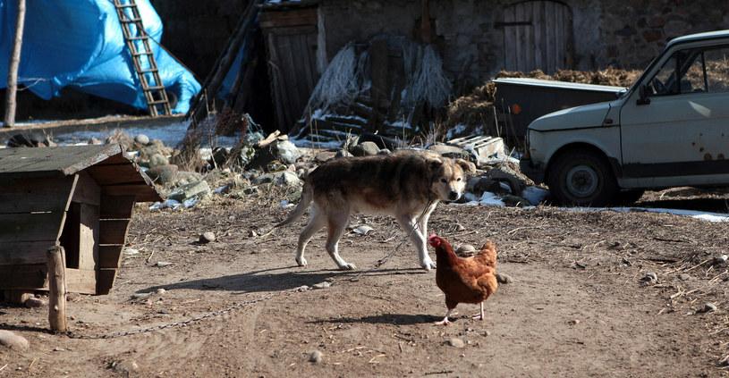 Okrucieństwo niektórych właścicieli nie zna granic /Katarzyna Mała /East News