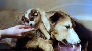 Okrutna biologia: Nieludzkie eksperymenty na zwierzętach