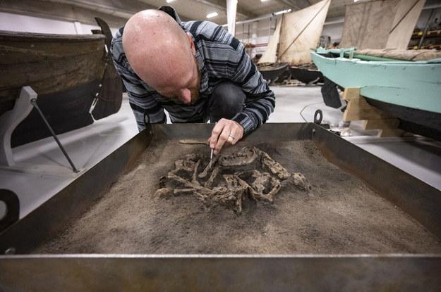 Ola Magnell badający szczątki psa /foto. Johan Nilsson/TT  /PAP/EPA