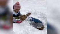 Olbrzymi królik bawi się na śniegu