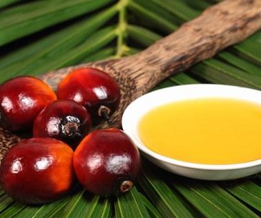 Olej palmowy: Szkodliwy czy nie? W jakich produktach go znajdziemy?