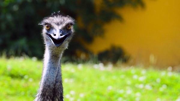 olej z emu /© Photogenica