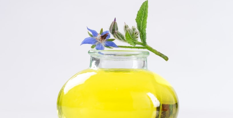 Olej z ogórecznika lekarskiego /©123RF/PICSEL