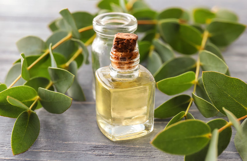 Olejek eukaliptusowy /©123RF/PICSEL