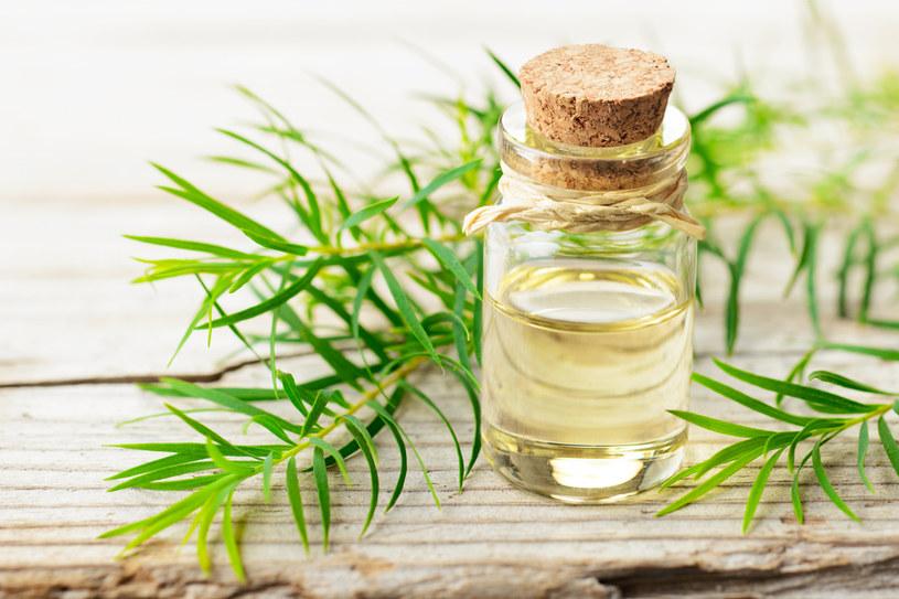 Olejek herbaciany może redukować ilość wydzielanego sebum /123RF/PICSEL