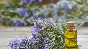 Olejek rozmarynowy - sposób na lepszą pamięć