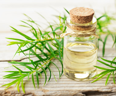 Olejek z drzewa herbacianego: Zastosowanie i sposoby użycia