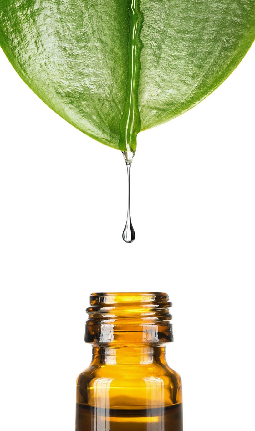 olejek z drzewa herbacianego /© Photogenica