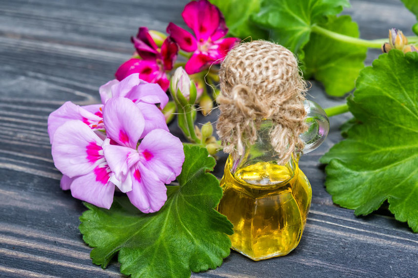Olejek z geranium /©123RF/PICSEL