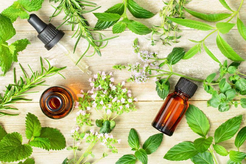Olejek z lebiodki pospolitej jest rekomendowany dla borykających się z pasożytami układu pokarmowego /123RF/PICSEL