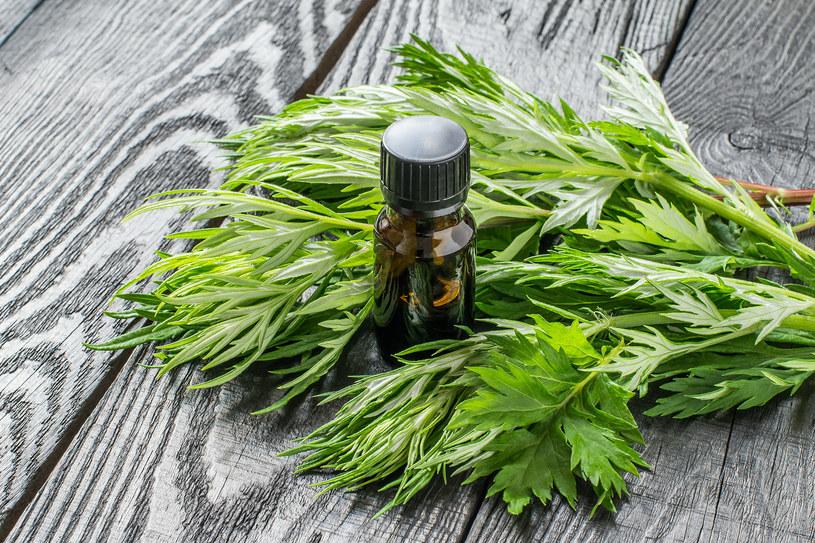Olejek z piołunu - naturalny lek na zapalenie oskrzeli /123RF/PICSEL
