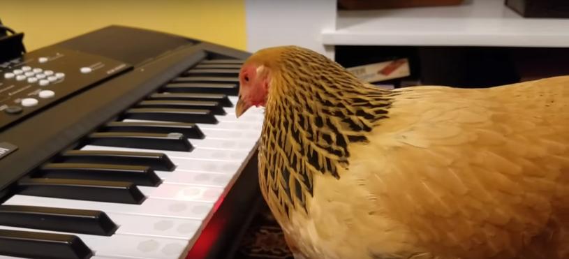 Ona nie stoi tutaj przez przypadek /Two Creative Chicks /YouTube
