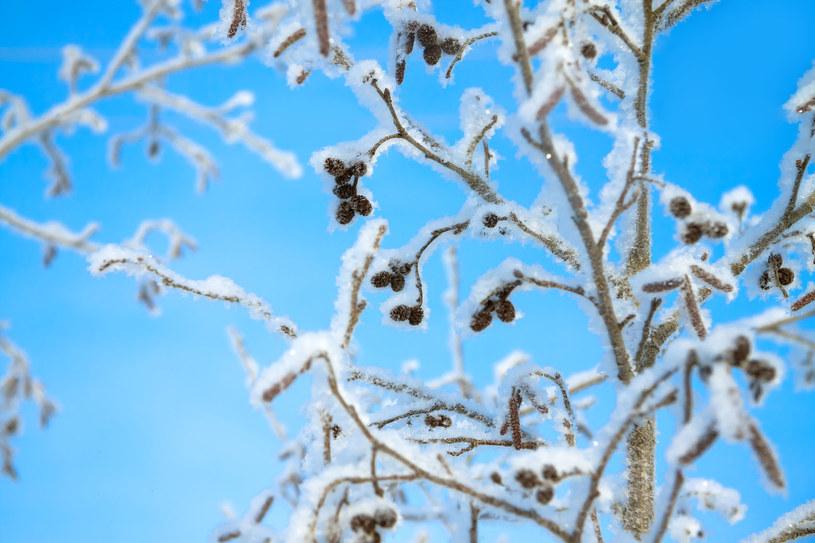 Opady śniegu prognozujemy tylko w górach /123RF/PICSEL