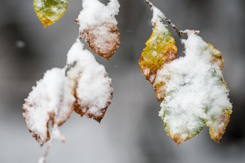 Opady śniegu spowodowały kłopoty, (zdj. ilustracyjne) /AFP