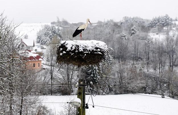 Opady śniegu w Zalesiu /Darek Delmanowicz /PAP