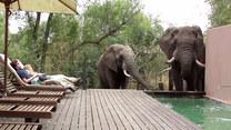 Opalali się przy basenie. Wtedy pojawiły się słonie