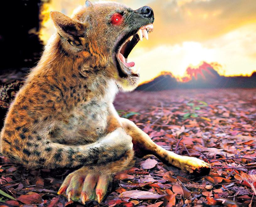 Opisy chupacabry różnią się w zależności od szerokości geograficznej i wskazują podobieństwo do przeróżnych gatunków zwierząt /21 wiek