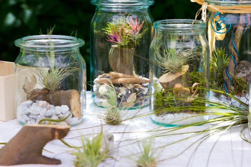 Oplątwa w ogrodach w słojach /©123RF/PICSEL