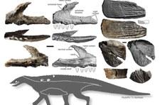 Opolskie: W Kocurach odkryto nowego prehistorycznego gada