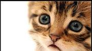 opowieść o kotku ;P